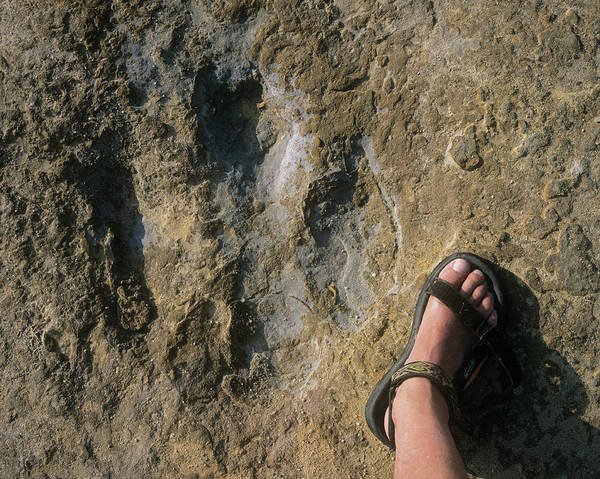 Wall Art - Photograph - Iguanodontid Dinosaur Footprint by Sinclair Stammers/science Photo Library