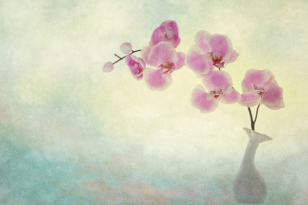 Photograph - Ikebana by Mary Buck