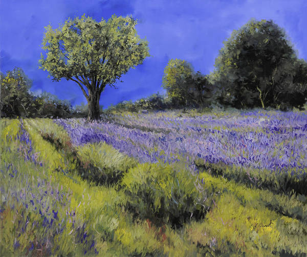 Lavender Wall Art - Painting - Il Campo Di Lavanda by Guido Borelli