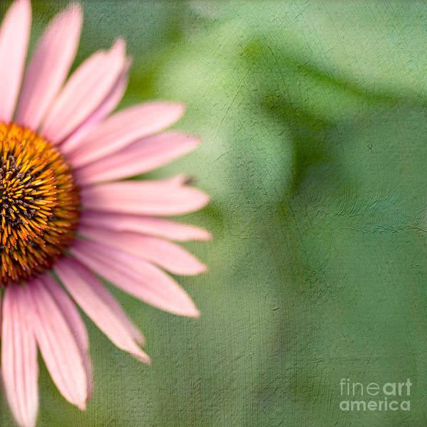 Coneflowers Photograph - I'll Take Half by Rebecca Cozart