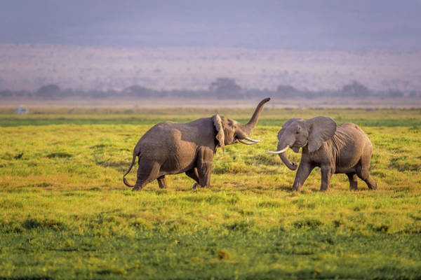 Amboseli Wall Art - Photograph - I'll Teach You by Ted Taylor
