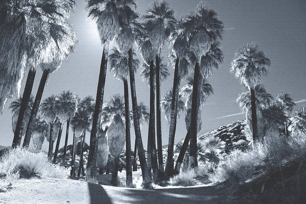 Palm Desert Photograph - Illuminate by Laurie Search