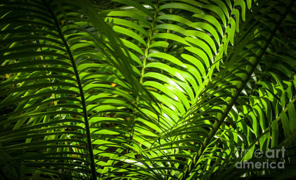 Illuminated Jungle Fern Art Print
