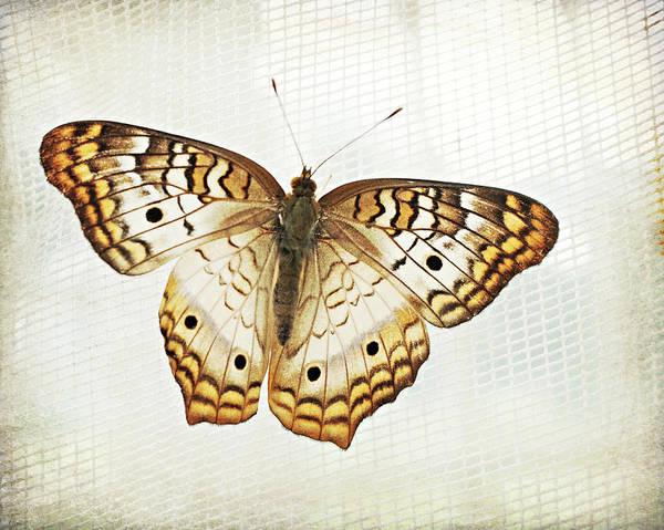 Illuminated Wings Art Print