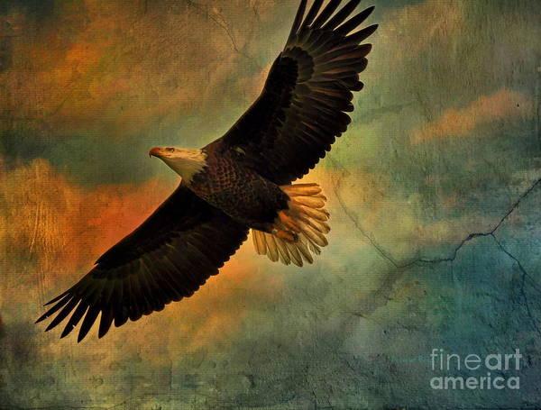 Eagle In Flight Photograph - Illumination Of Spirit by Deborah Benoit