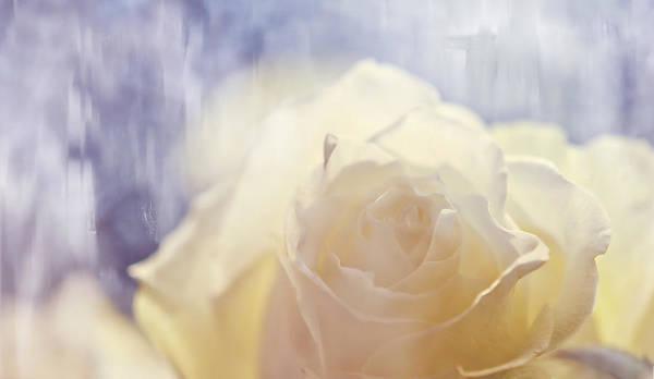 Rainbow Rose Wall Art - Photograph - Illusion by Jenny Rainbow