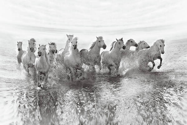 Mane Wall Art - Photograph - Illusion Of Power (13 Horse Power Though) by Roman Golubenko