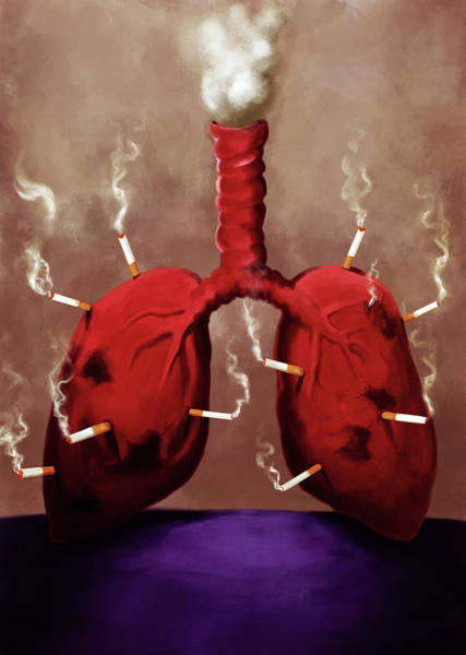 Social Living Wall Art - Photograph - Illustration Of Cigarettes Stuck On Lungs by Fanatic Studio / Science Photo Library