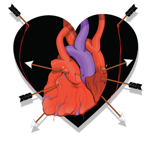 Wall Art - Photograph - Illustration Of Heart With Arrows by Fanatic Studio / Science Photo Library