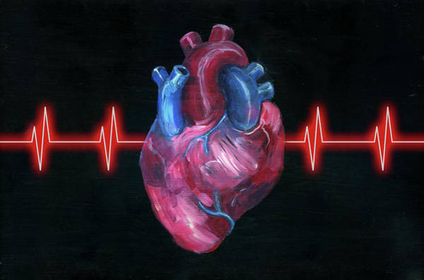 Wall Art - Photograph - Illustration Of Human Heart With Pulse Trace by Fanatic Studio / Science Photo Library