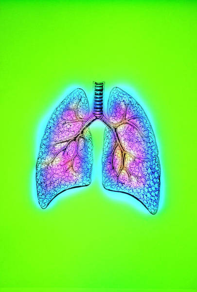 Wall Art - Photograph - Illustration Of Human Lungs by Mehau Kulyk/science Photo Library