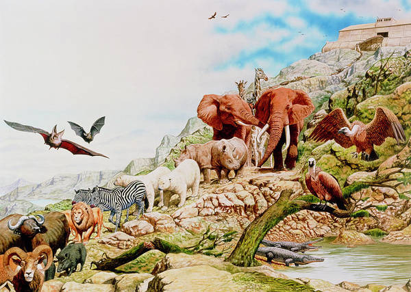 Noahs Ark Wall Art - Photograph - Illustration Of Noah's Ark by A. Gragera, Latin Stock/science Photo Library