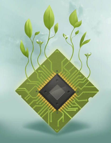 Realistic Photograph - Illustration Of Plants Growing On Microchip by Fanatic Studio / Science Photo Library
