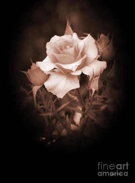 Wall Art - Digital Art - I'm A Beautiful Rose by Heinz G Mielke