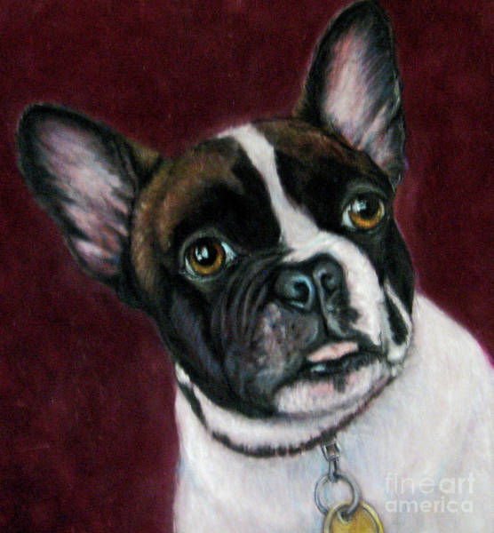 Wall Art - Drawing - I'm A Frenchie by Beverly Fuqua