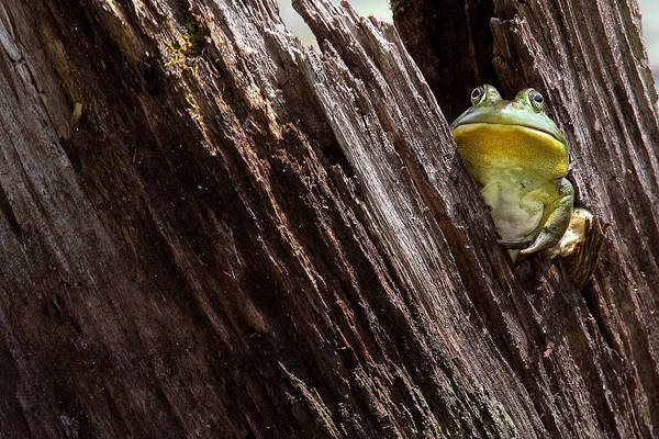 Photograph - I'm A Little Big Grumpy by Dawn J Benko