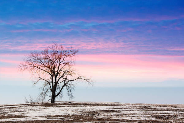 Christy Photograph - I'm Just A Tree by Christy Patino
