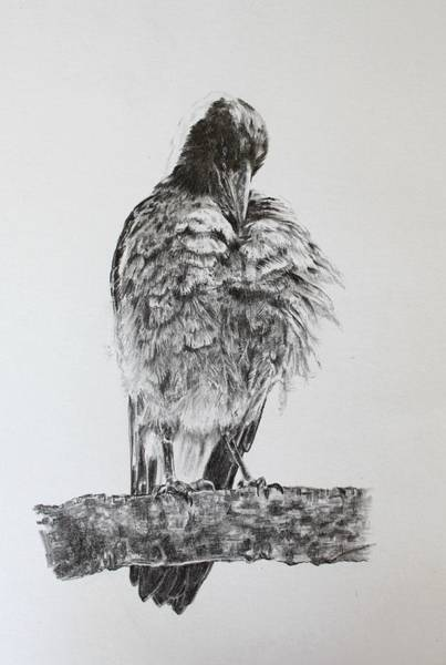 Magpies Drawing - Image Is Everything by Leonie Bell