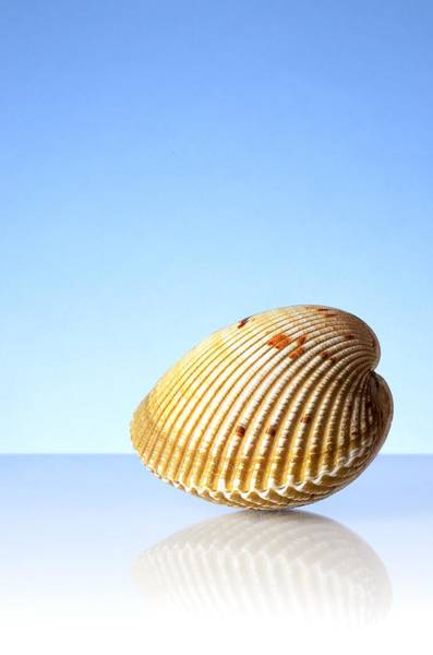 Cockle Wall Art - Photograph - Imaginary Beach by Jim Hughes