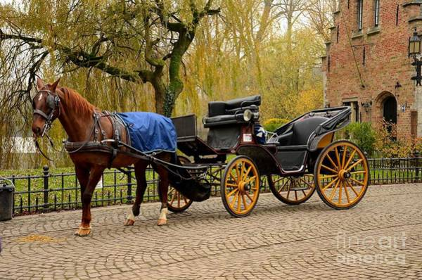 Photograph - Immaculate Horse And Carriage by Imran Ahmed