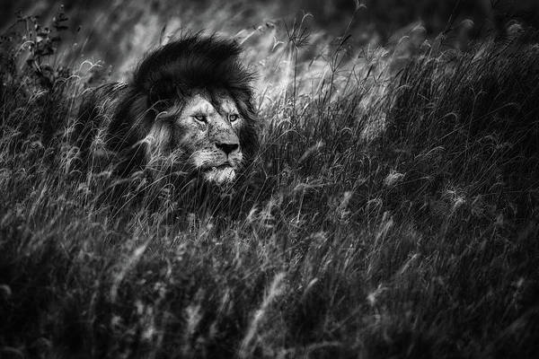 Wild Grass Photograph - Immortal by Mohammed Alnaser