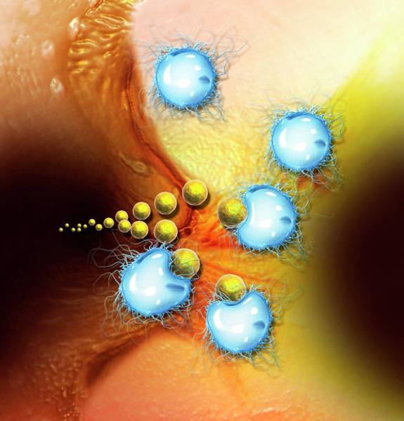 Wall Art - Photograph - Immune Response by Claus Lunau