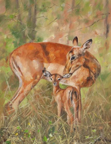 Deer Wall Art - Painting - Impala Antelop by David Stribbling