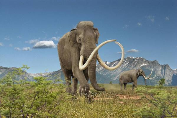 Wall Art - Photograph - Imperial Mammoth by Roman Uchytel/science Photo Library