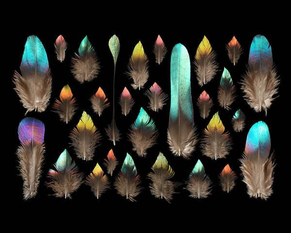 Background Mixed Media - Impeyan Monal Pheasant by Chris Maynard