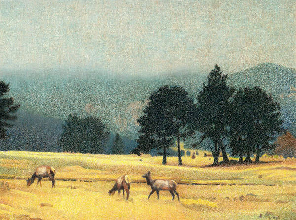 Evergreen Trees Drawing - Impression Evergreen Colorado by Dan Miller
