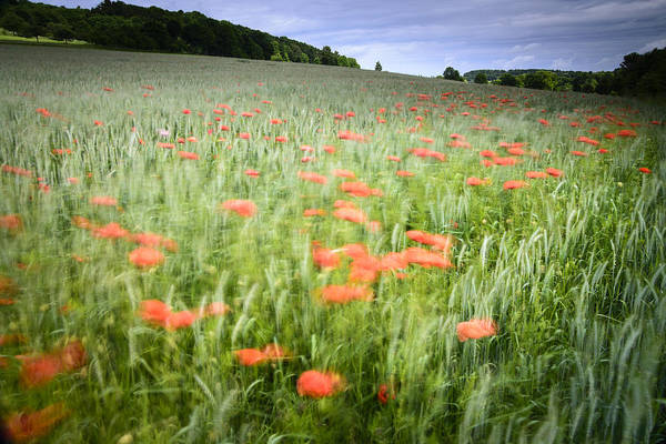 Hessen Photograph - Impression Of A Poppy Field by Andy-Kim Moeller