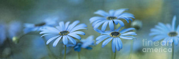 Hue Photograph - In A Corner Of A Garden by Priska Wettstein