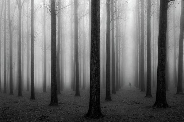 Trunks Photograph - In A Fog by Jochen Bongaerts