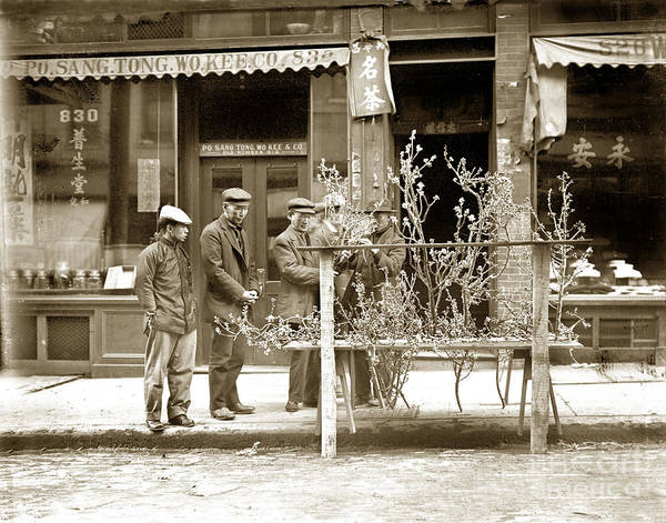 Photograph - In Almond Blossom Time San Francisco Chinatown Circa 1912 by California Views Archives Mr Pat Hathaway Archives