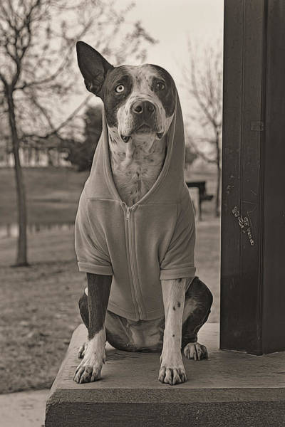 Photograph - In Da Hood  by Brian Cross