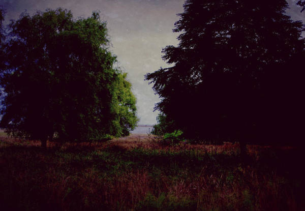 Photograph - In Darkness by Marilyn Wilson