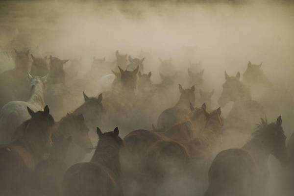 Herd Photograph - In Dust by H?seyin Ta?k?n