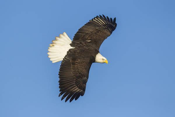 Photograph - In Flight by D Robert Franz