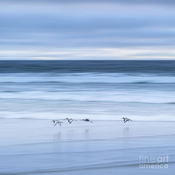 Photograph - In Flight I by Alexander Kunz
