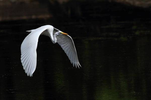 Photograph - In Flight by Mike Farslow