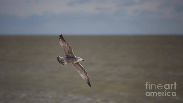 Soar Photograph - In Flight by Nigel Jones