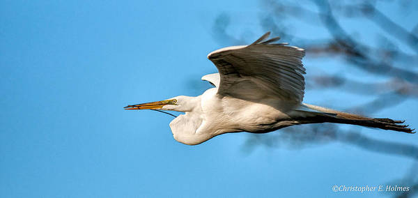 Photograph - In Flight With Stick by Christopher Holmes