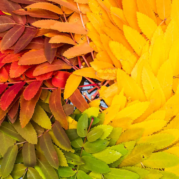 Rainbow Photograph - In Living Color by Aaron Aldrich