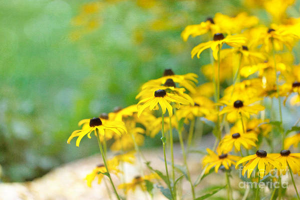 Photograph - In Memory Of Summer by Beve Brown-Clark Photography