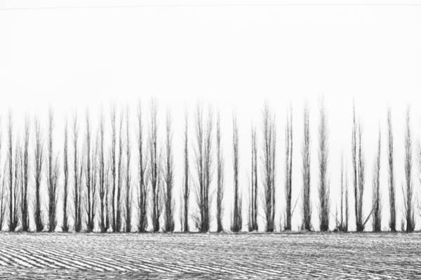 Cours Photograph - In Order by Paul Bartoszek