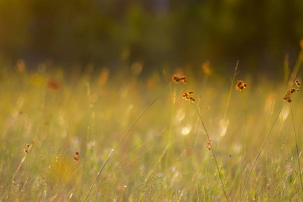 Photograph - In Silence by Melanie Moraga