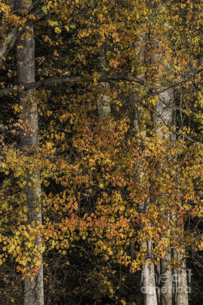 Photograph - In The Back Yard by David Waldrop