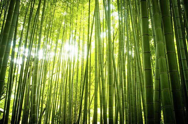 Kamakura Wall Art - Photograph - In The Bamboo Grove by Marser