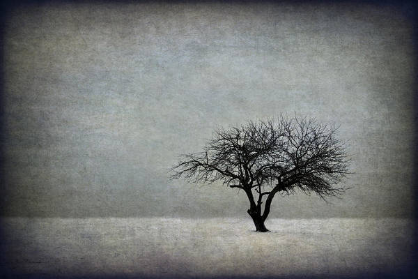 Single Tree Wall Art - Photograph - In The Bleak Of Midwinter by Evelina Kremsdorf
