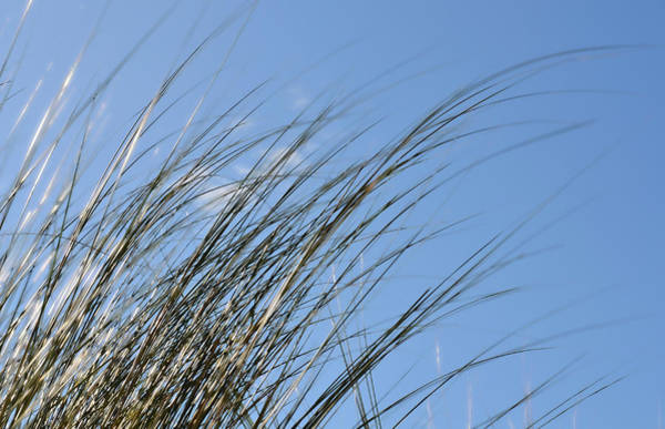 Ocean Breeze Photograph - In The Breeze - Soft Grasses By Sharon Cummings by Sharon Cummings